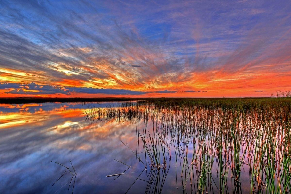 Miami Everglades tour